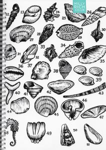 Milly's seashell drawings
